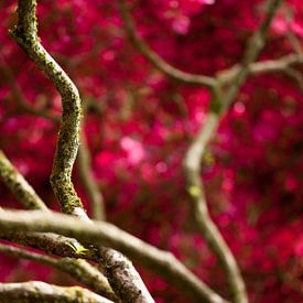 Takken met rode bloesem van Raoul Suermondt