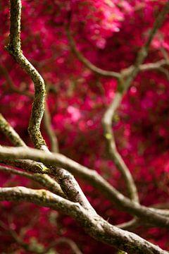 Japanese Garden 1 von Raoul Suermondt