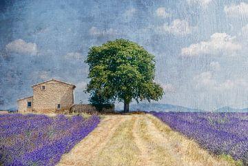 Lavendel in de Provence van Joachim G. Pinkawa