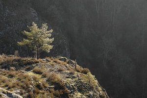 Eenzame boom. van