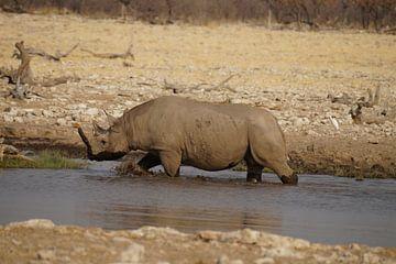 Neushoorn neemt een bad von Erna Haarsma-Hoogterp