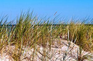 Weisse Sand-Düne auf der Insel Rügen