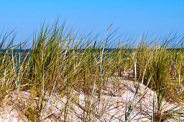 Sand Dune on the Isle of Ruegen at the Baltic Sea  van