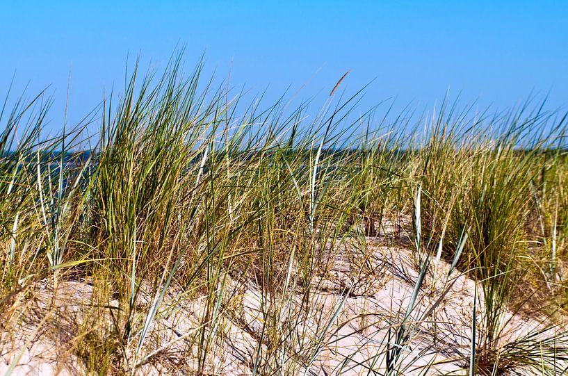 Weisse Sand-Düne auf der Insel Rügen von Silva Wischeropp
