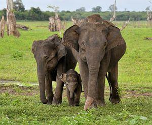 familie van drie Aziatische Olifanten van Riekus Reinders