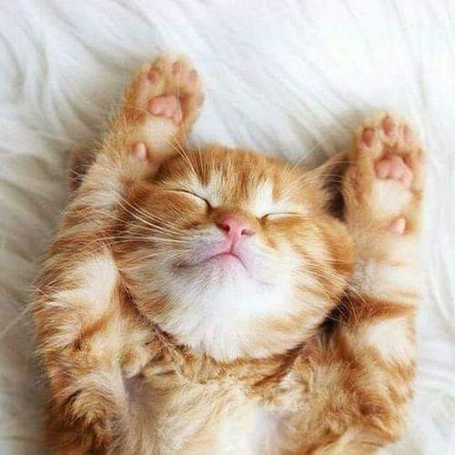 Schattige slapende kat von Wilma Prins