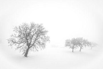 Mist van Frans Scherpenisse
