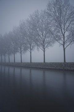 Rij met bomen in de mist  von Remco Swiers