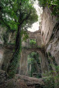 Ruine Baumhaus