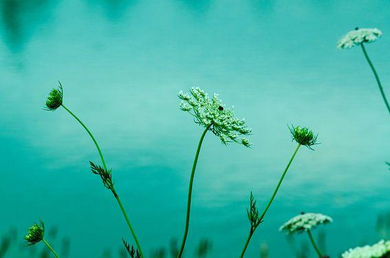 Witte bloemen aan het water
