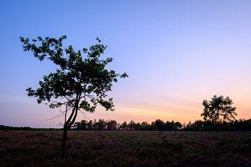 Sonnenuntergang-Silhouette von Johan Vanbockryck