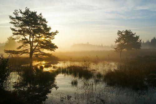 Bordelumer Heide
