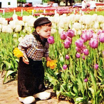 Dutch Boy with Tulips van