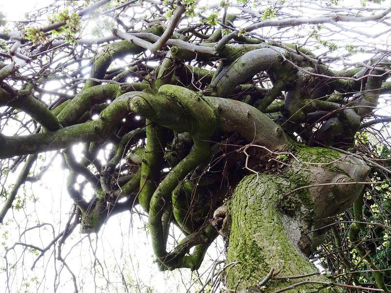 Tree Magic 153