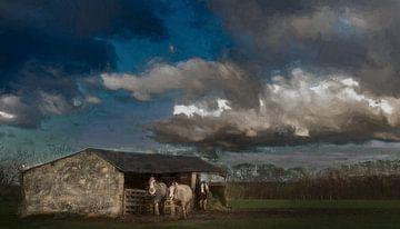 Tinker paarden bij Bemelen in Zuid-Limburg van Mike Broers