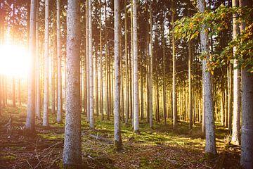 Herbstliche Farben im Wald von Nick van Dijk