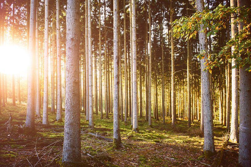 Herfstkleuren in het bos van Nick van Dijk