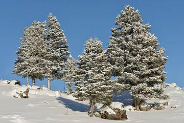 Winter, Schnee und blauer Himmel => gute Laune von