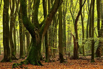 Majestueuze bomen. van Francis Dost