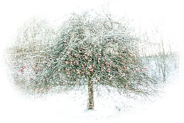 pommes dans la neige sur Guido Rooseleer