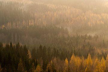Blick über den Kiefernwald am Morgen. von Axel Weidner
