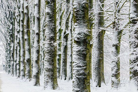 Winter landschap van Erwin Maassen van den Brink
