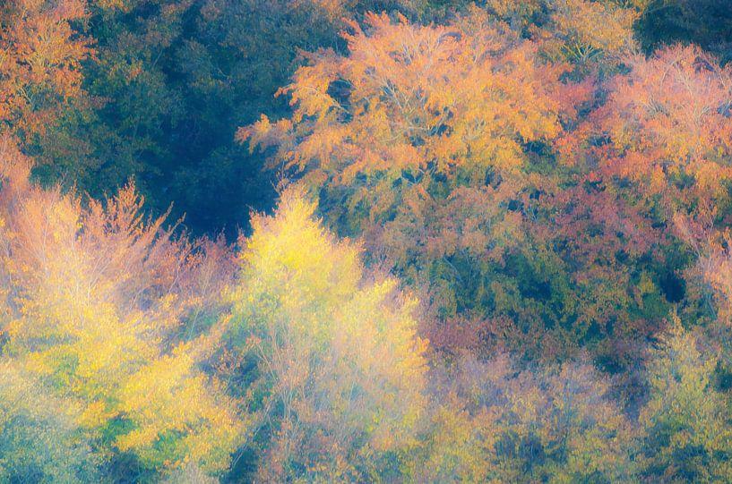 Kleurrijk herfstbos van Mark Bolijn
