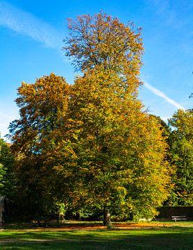 Herbstliche Farben in den Wäldern und Mooren von Oisterwijk von Nel Diepstraten