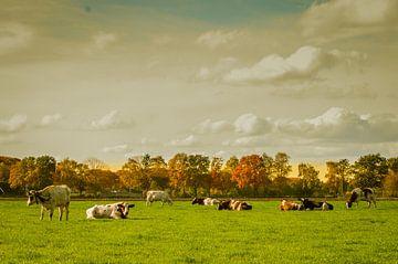 Koeien sur Hetty van der Zanden