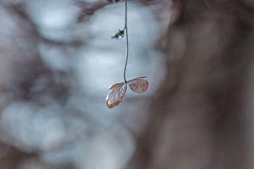 hangend aan een zijden draadje van Tania Perneel