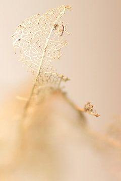 Winter leaf in beige van
