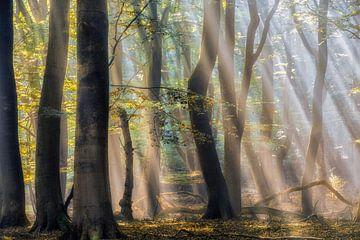 Der verzauberte Wald von Lars van de Goor