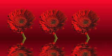 Rote Gerbera van Martina Fornal