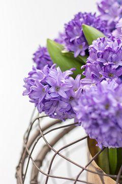 Paarse hyacinten von Petra Brouwer