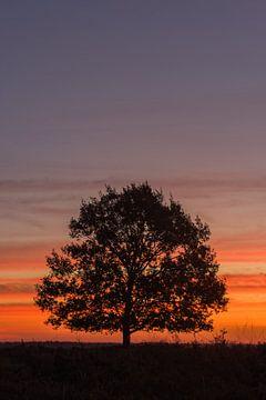 Einzelner Baum von Robin van Maanen