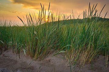 Gartenplakat der Dünenlandschaft von eric van der eijk