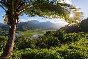 Kauai van