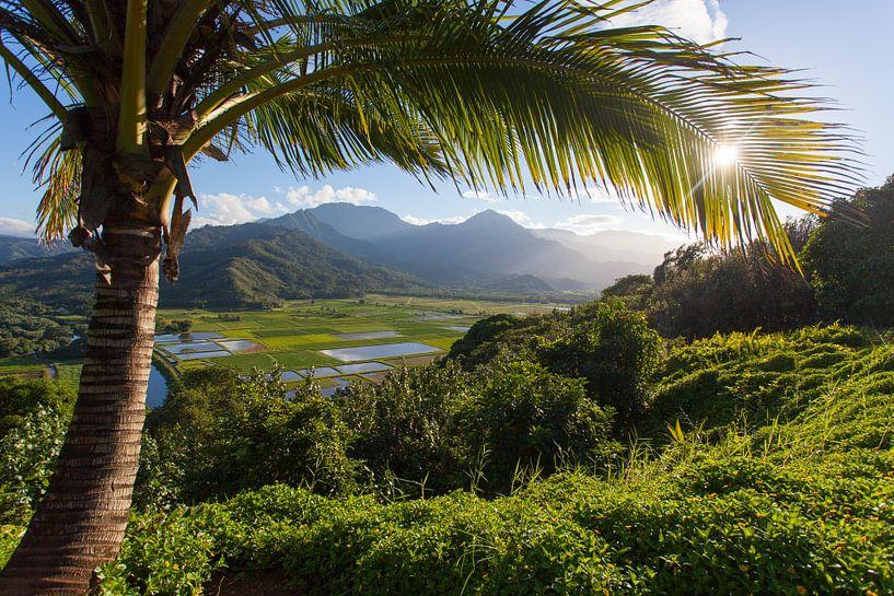 Kauai van Milene Bezemer