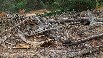 Dood hout maakt een levendig schouwspel van Richard de Ruijter
