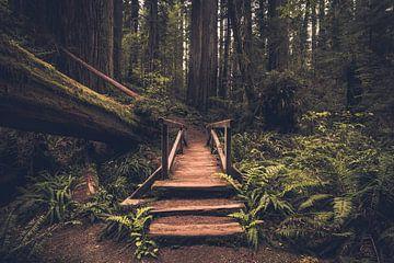 Pont vers l'inconnu sur Joris Pannemans - Loris Photography