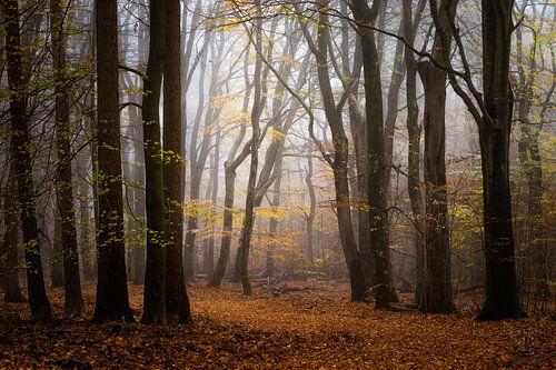 Licht voorbij de schaduwen van Tvurk Photography