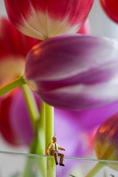 Meneer Jan in de Tulpenwereld van Hélène Wiesenhaan