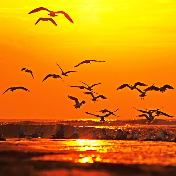 vogels op het strand van Dirk van Egmond