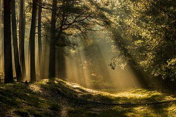 Zonsopgang in het bos van Heiko Lehmann