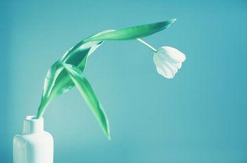Witte tulp in een vaas van