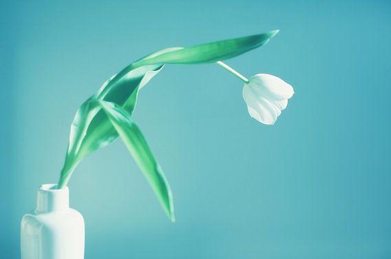 Witte tulp in een vaas van LHJB Photography