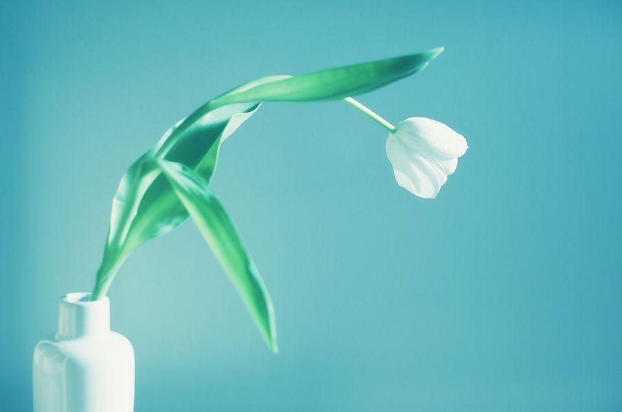 Witte tulp in een vaas