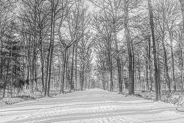 Winter im Wald von Tineke van Persie-Klein