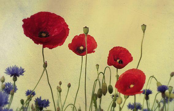 4 Poppies van  Tanja Riedel