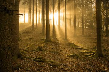 Brouillard dans la forêt sur Robin Feldmann